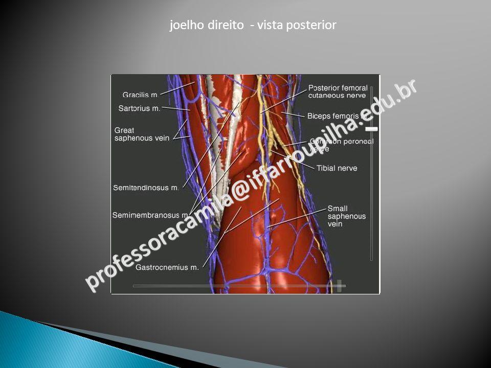 joelho direito - vista posterior