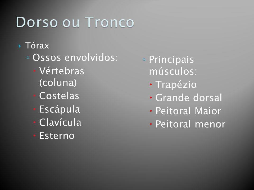 Dorso ou Tronco Ossos envolvidos: Vértebras (coluna)