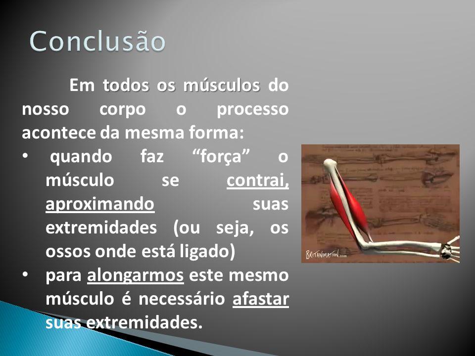 Conclusão Em todos os músculos do nosso corpo o processo acontece da mesma forma: