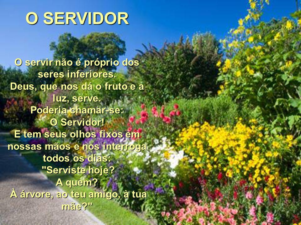 O SERVIDOR O servir não é próprio dos seres inferiores.