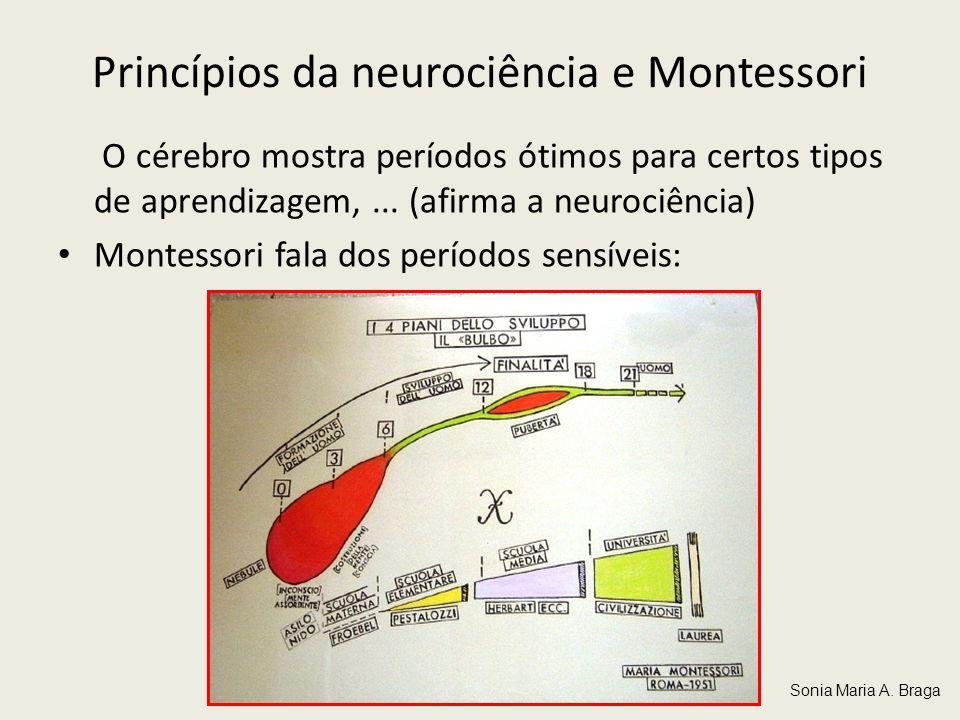 Princípios da neurociência e Montessori