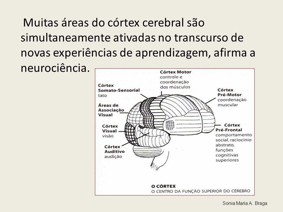 Muitas áreas do córtex cerebral são simultaneamente ativadas no transcurso de novas experiências de aprendizagem, afirma a neurociência.