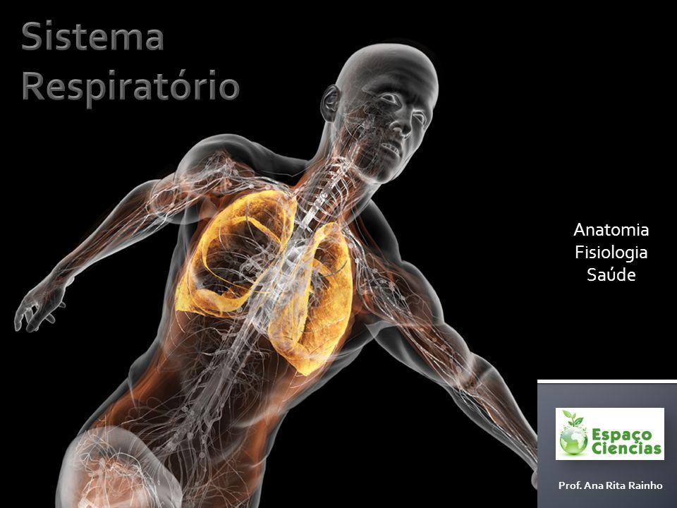 Anatomia Fisiologia Saúde