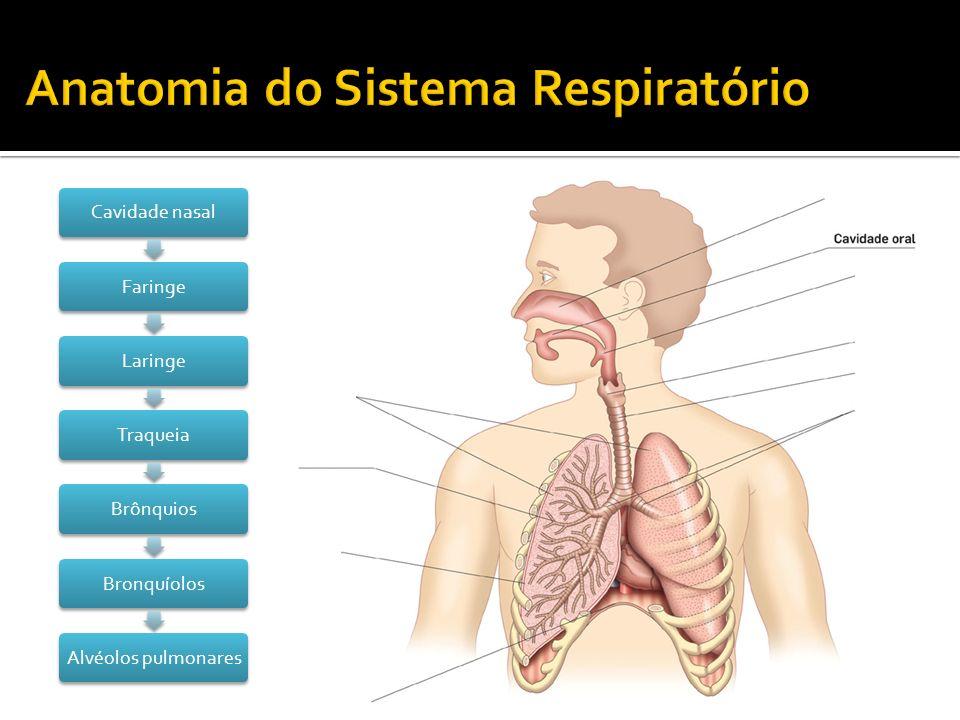 Anatomia do Sistema Respiratório