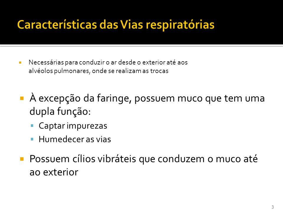 Características das Vias respiratórias