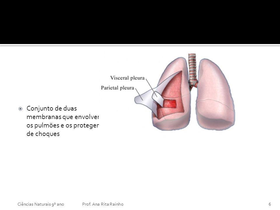 Pleura Conjunto de duas membranas que envolvem os pulmões e os protegem de choques. Ciências Naturais 9º ano.
