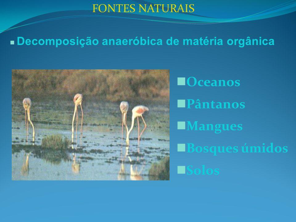 Oceanos Pântanos Mangues Bosques úmidos Solos FONTES NATURAIS