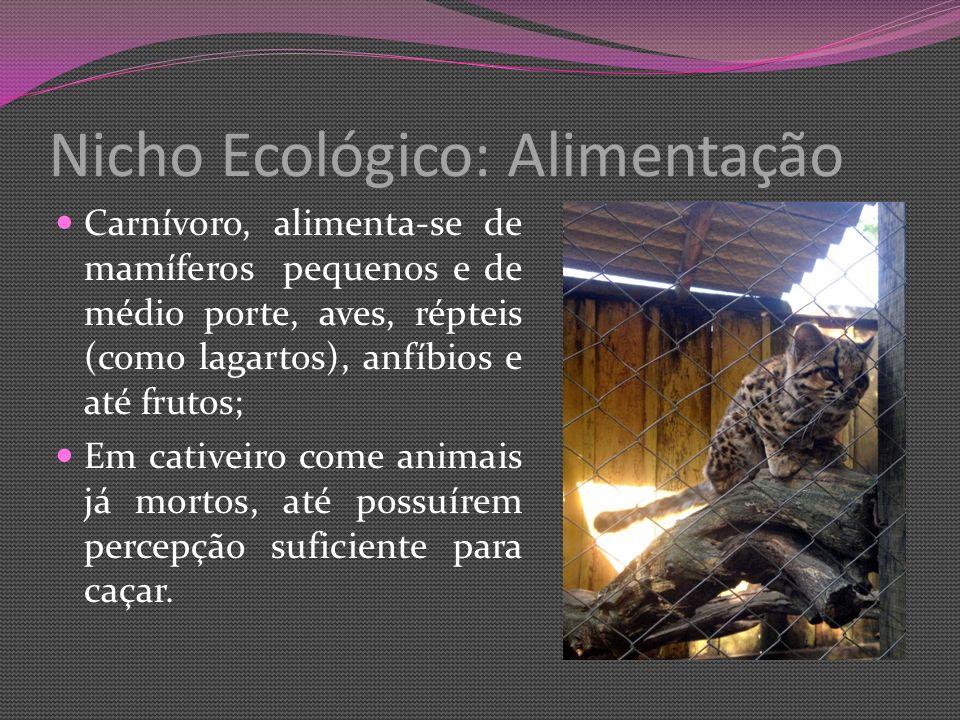 Nicho Ecológico: Alimentação