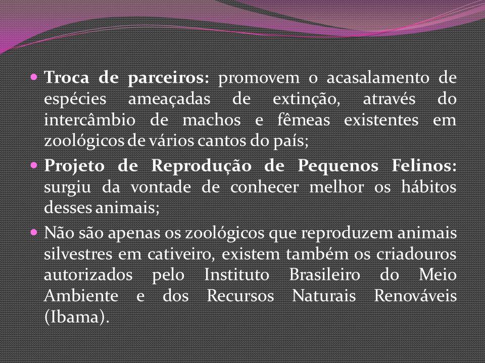 Troca de parceiros: promovem o acasalamento de espécies ameaçadas de extinção, através do intercâmbio de machos e fêmeas existentes em zoológicos de vários cantos do país;