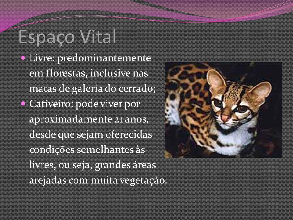 Espaço Vital Livre: predominantemente em florestas, inclusive nas