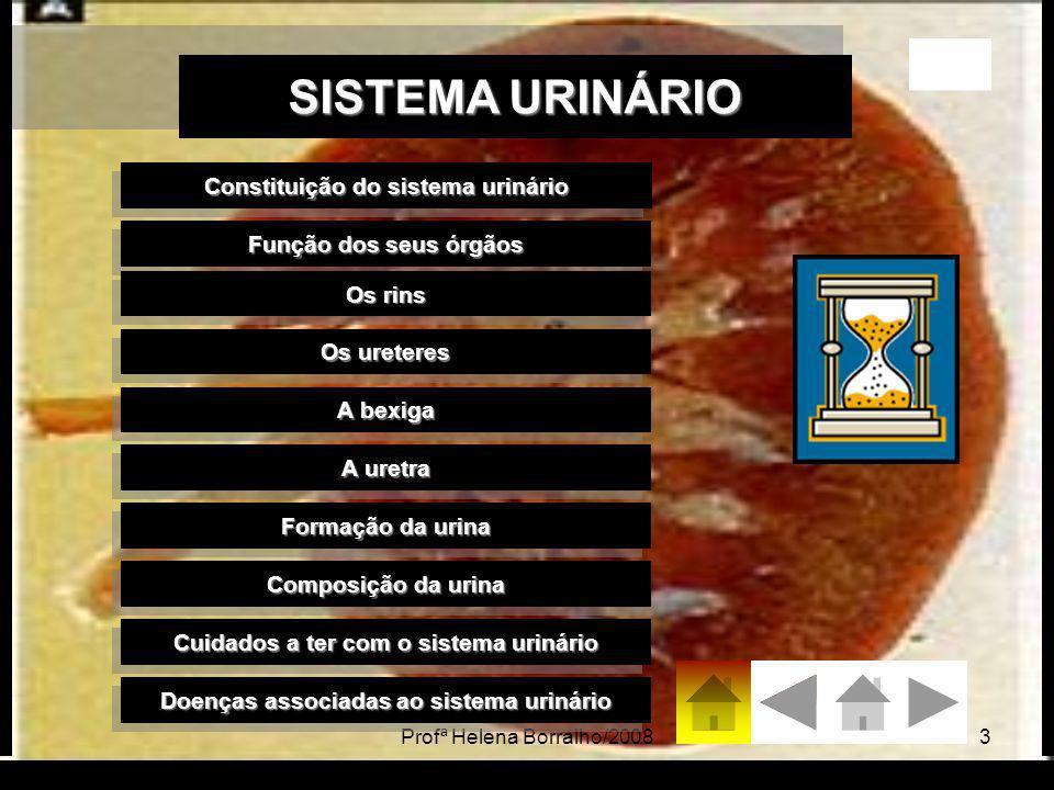SISTEMA URINÁRIO Constituição do sistema urinário