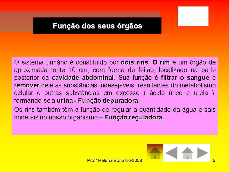 Profª Helena Borralho/2008