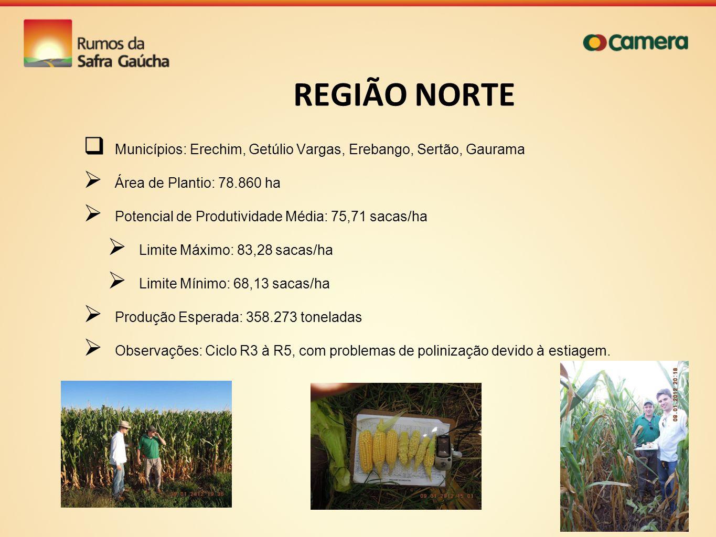REGIÃO NORTE Municípios: Erechim, Getúlio Vargas, Erebango, Sertão, Gaurama. Área de Plantio: 78.860 ha.