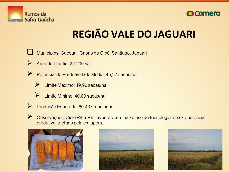 REGIÃO VALE DO JAGUARI Municípios: Cacequi, Capão do Cipó, Santiago, Jaguari. Área de Plantio: 22.200 ha.