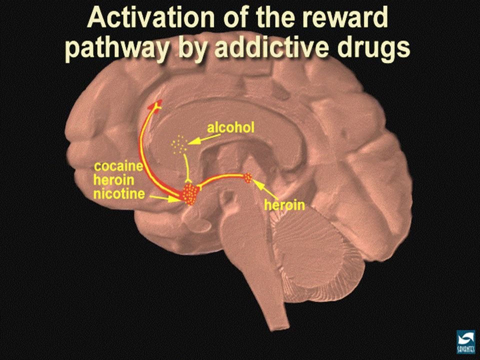 Indo para um nivel de mais detalhe, todas as drogas de abuso mexem nesta região, mexem no sentido de fazer com que o meu planejador cerebral obtenha doses frequentes e repetidas daquele prazer. Mexem no sentido de aumentar a liberação de dopamina.