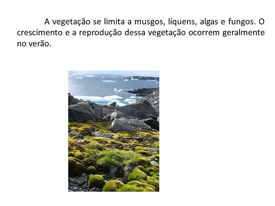A vegetação se limita a musgos, líquens, algas e fungos