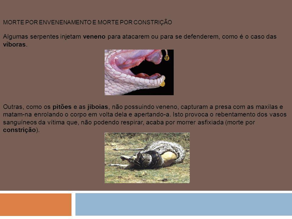 MORTE POR ENVENENAMENTO E MORTE POR CONSTRIÇÃO Algumas serpentes injetam veneno para atacarem ou para se defenderem, como é o caso das víboras.