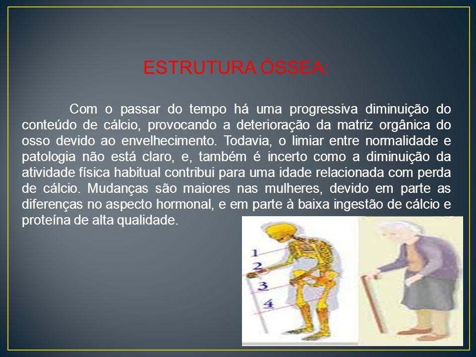 ESTRUTURA ÓSSEA: