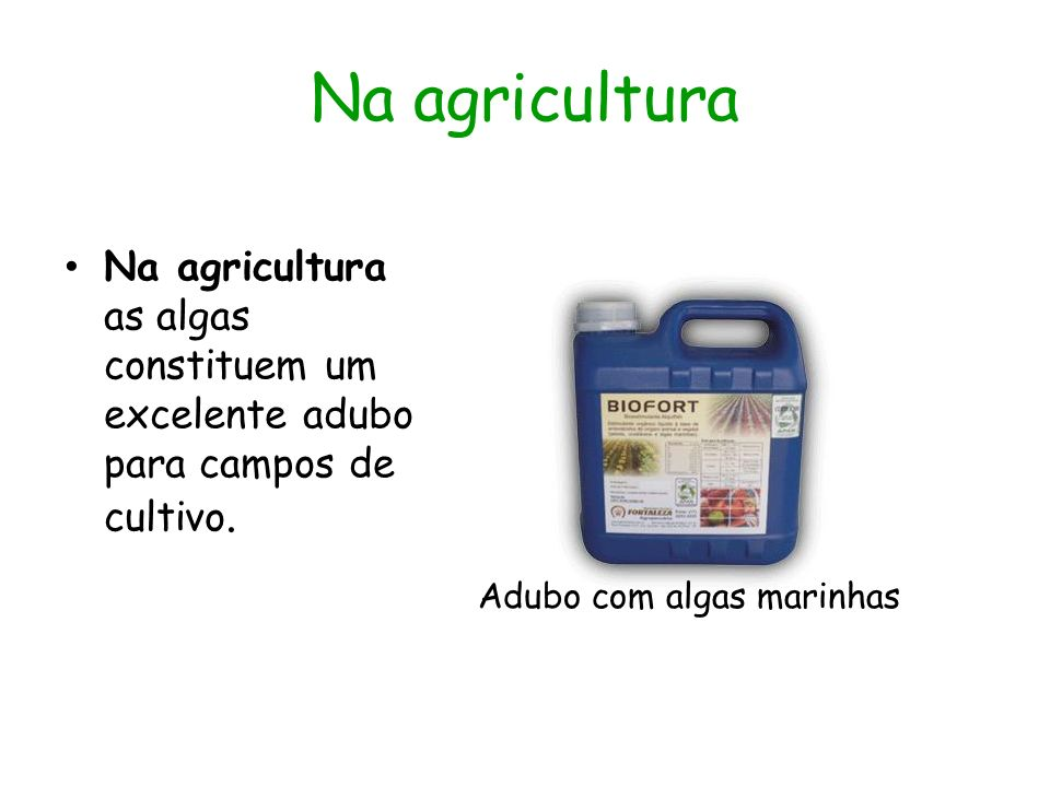 Na agricultura Na agricultura as algas constituem um excelente adubo para campos de cultivo.