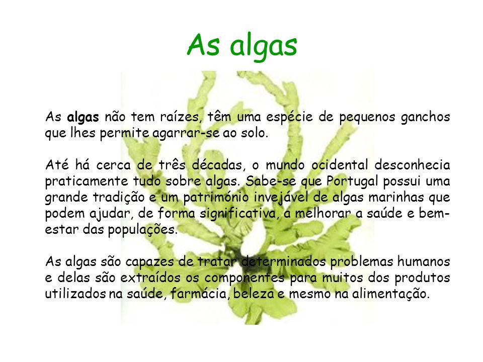 As algas As algas não tem raízes, têm uma espécie de pequenos ganchos que lhes permite agarrar-se ao solo.