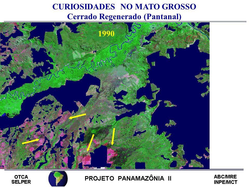 CURIOSIDADES NO MATO GROSSO Cerrado Regenerado (Pantanal)