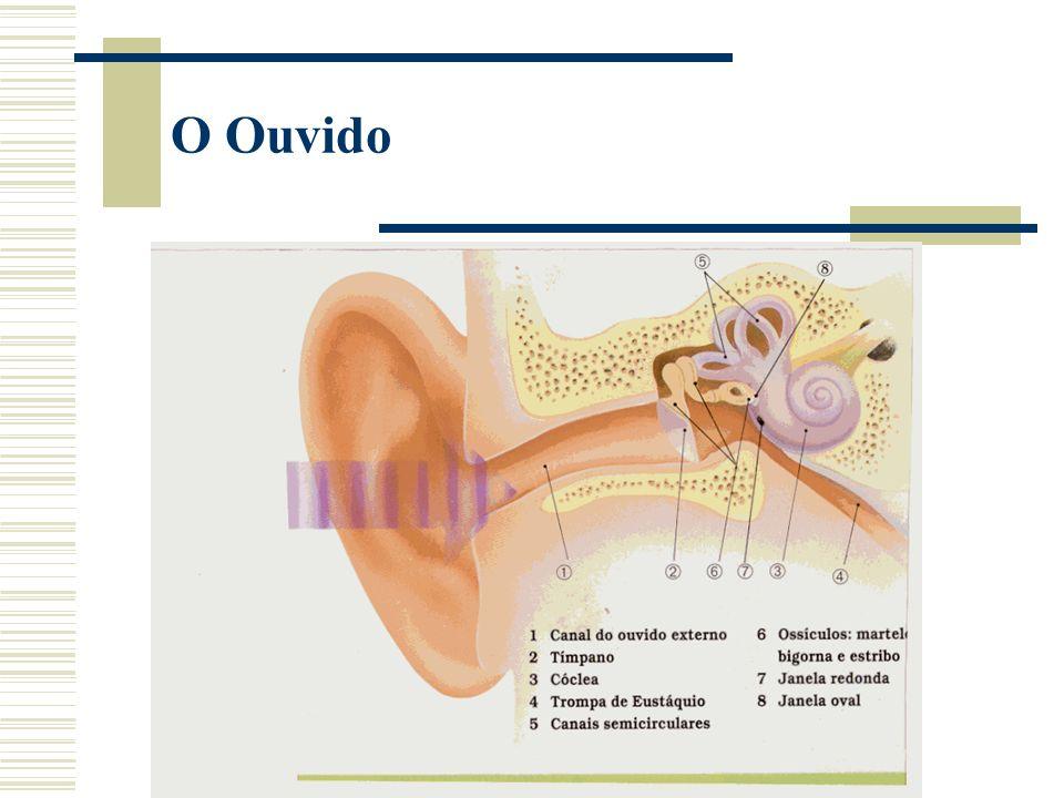 O Ouvido
