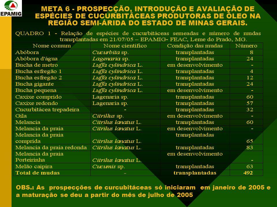 META 6 - PROSPECÇÃO, INTRODUÇÃO E AVALIAÇÃO DE ESPÉCIES DE CUCURBITÁCEAS PRODUTORAS DE ÓLEO NA REGIÃO SEMI-ÁRIDA DO ESTADO DE MINAS GERAIS.