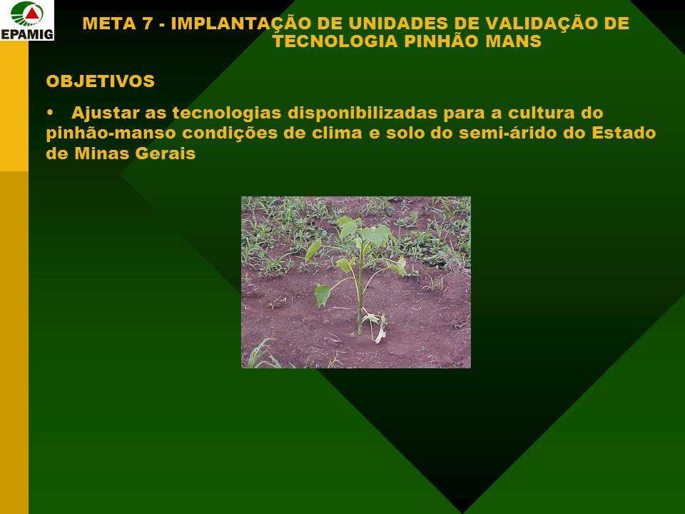 META 7 - IMPLANTAÇÃO DE UNIDADES DE VALIDAÇÃO DE TECNOLOGIA PINHÃO MANS