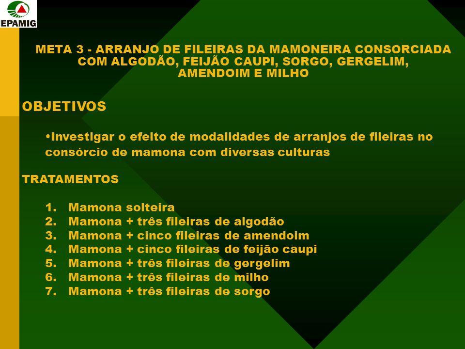 META 3 - ARRANJO DE FILEIRAS DA MAMONEIRA CONSORCIADA COM ALGODÃO, FEIJÃO CAUPI, SORGO, GERGELIM, AMENDOIM E MILHO