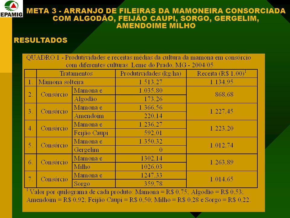 META 3 - ARRANJO DE FILEIRAS DA MAMONEIRA CONSORCIADA COM ALGODÃO, FEIJÃO CAUPI, SORGO, GERGELIM, AMENDOIME MILHO