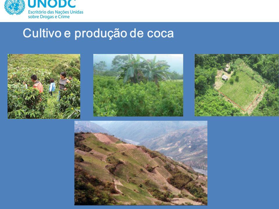 Cultivo e produção de coca