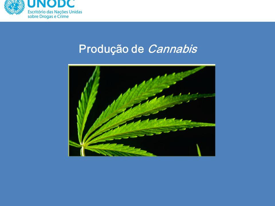 Produção de Cannabis