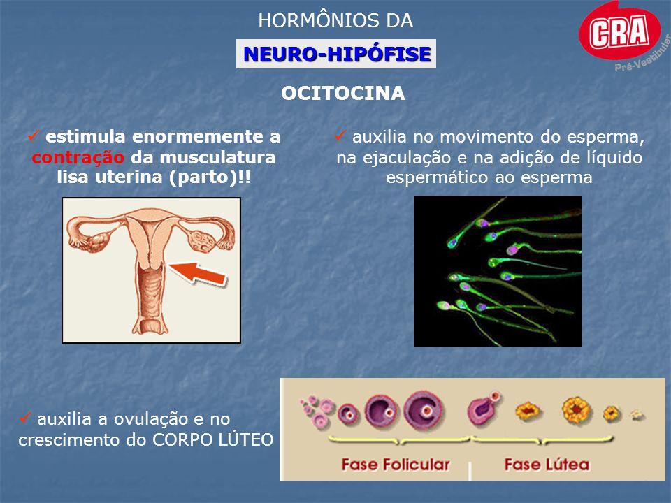 HORMÔNIOS DA NEURO-HIPÓFISE OCITOCINA