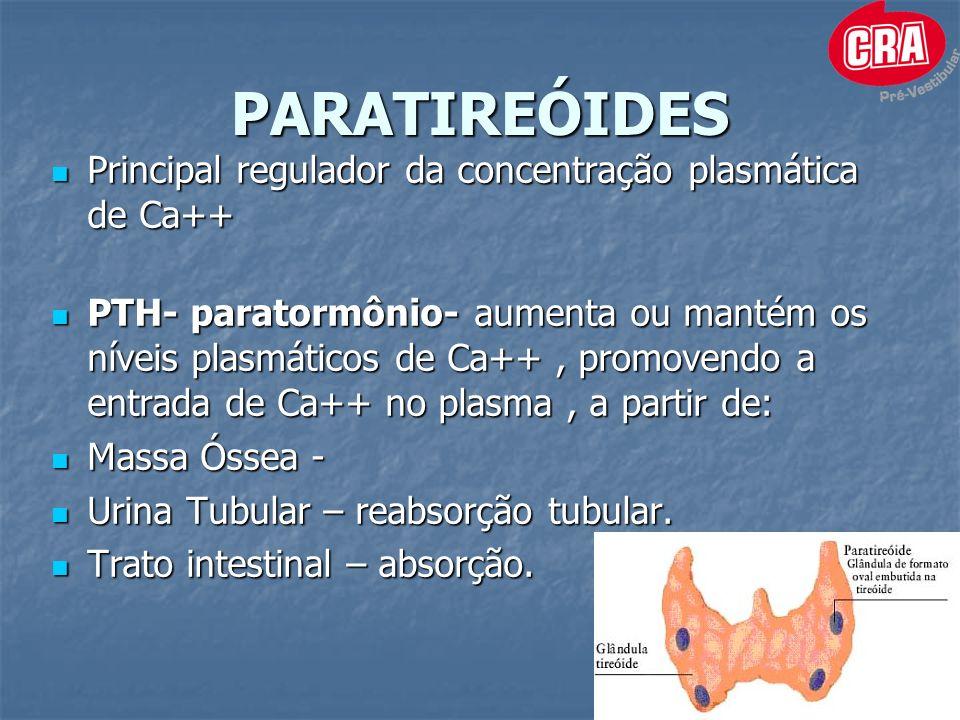 PARATIREÓIDES Principal regulador da concentração plasmática de Ca++