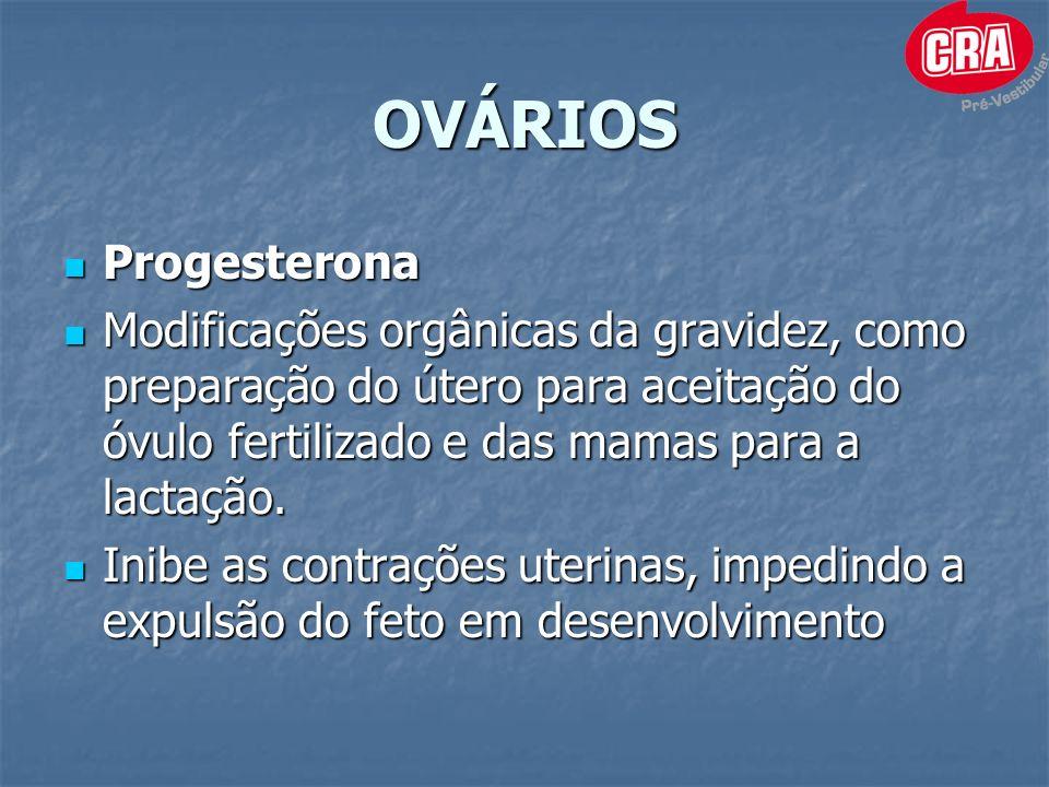 OVÁRIOS Progesterona. Modificações orgânicas da gravidez, como preparação do útero para aceitação do óvulo fertilizado e das mamas para a lactação.