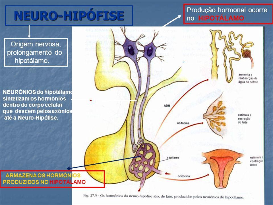 NEURO-HIPÓFISE Produção hormonal ocorre no HIPOTÁLAMO Origem nervosa,