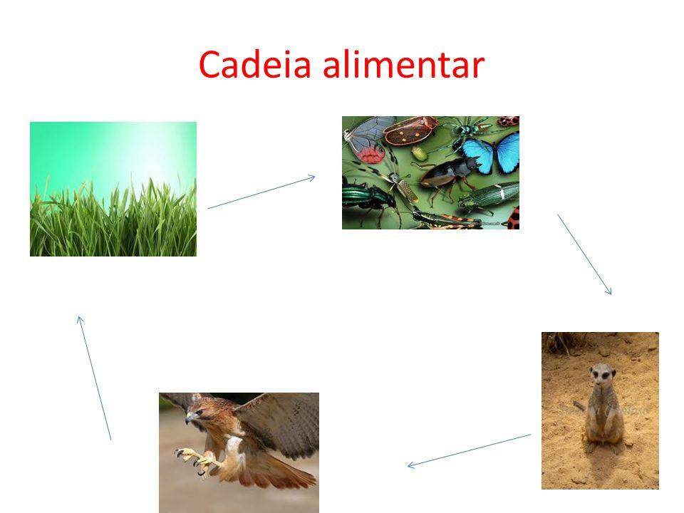 Cadeia alimentar