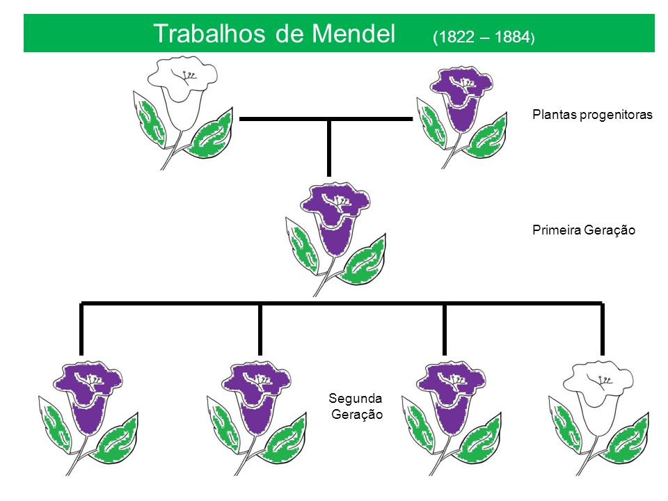 Trabalhos de Mendel (1822 – 1884)