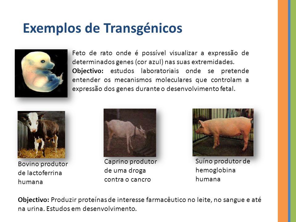 Exemplos de Transgénicos