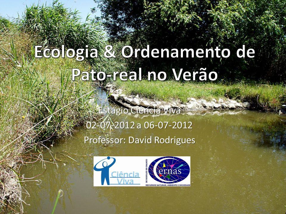 Ecologia & Ordenamento de Pato-real no Verão
