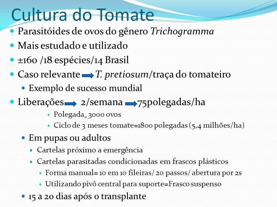 Cultura do Tomate Parasitóides de ovos do gênero Trichogramma
