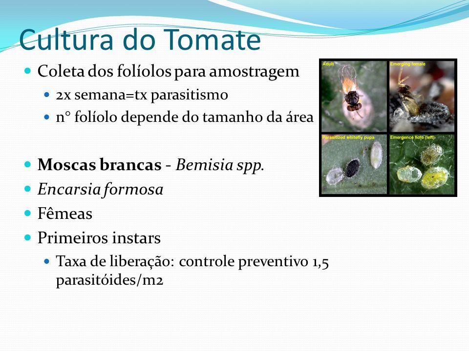 Cultura do Tomate Coleta dos folíolos para amostragem