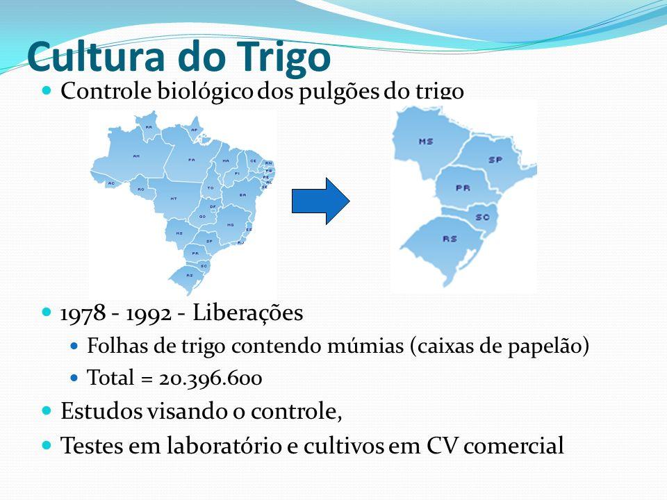Cultura do Trigo Controle biológico dos pulgões do trigo
