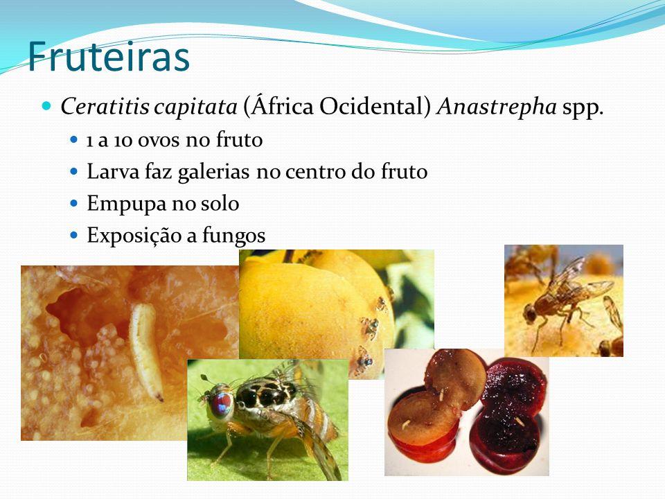 Fruteiras Ceratitis capitata (África Ocidental) Anastrepha spp.