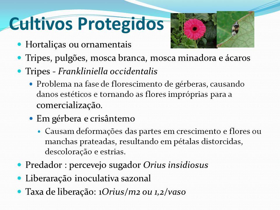 Cultivos Protegidos Hortaliças ou ornamentais