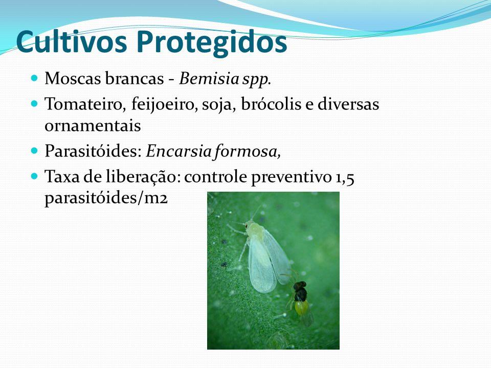 Cultivos Protegidos Moscas brancas - Bemisia spp.
