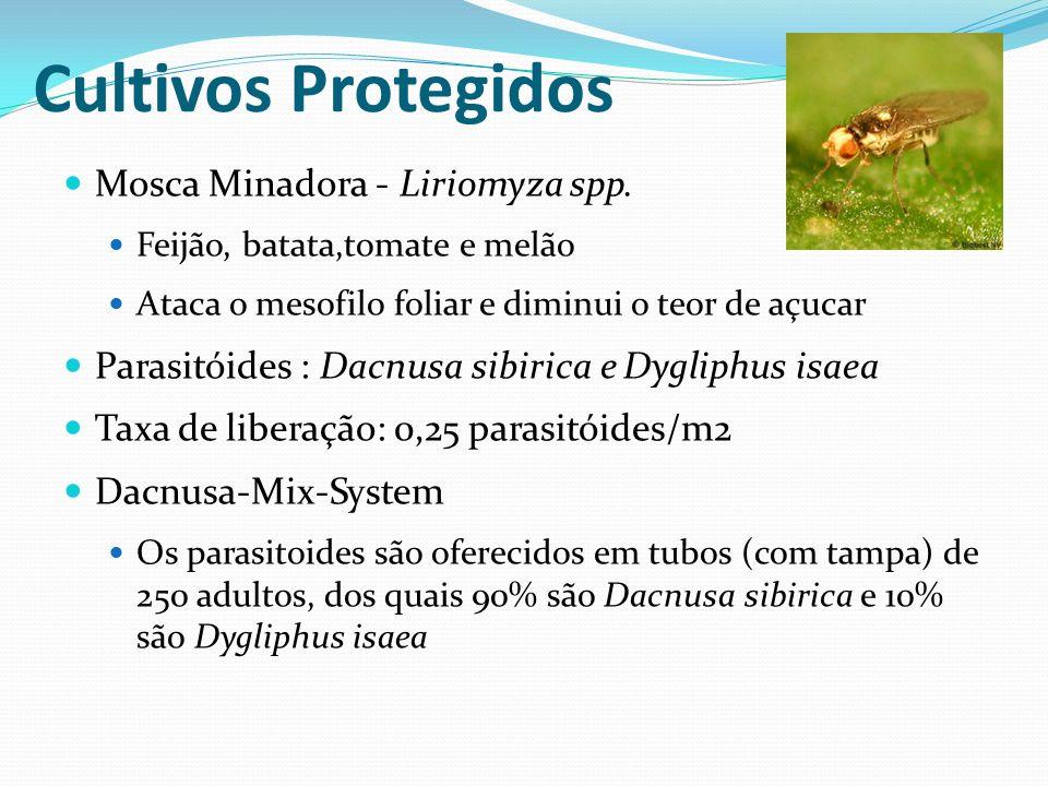 Cultivos Protegidos Mosca Minadora - Liriomyza spp.