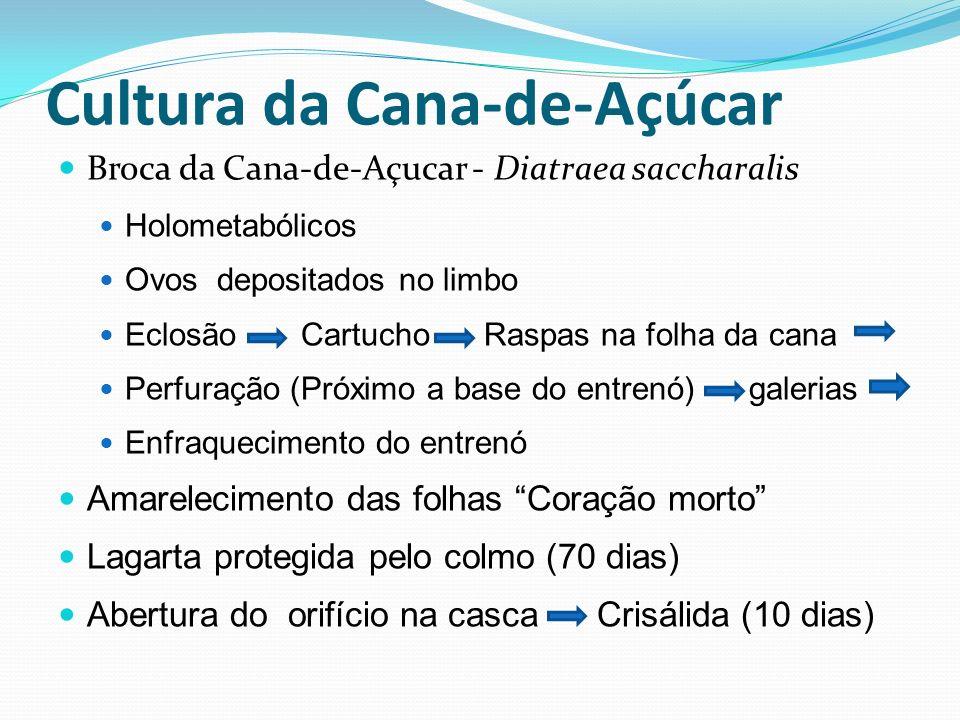 Cultura da Cana-de-Açúcar