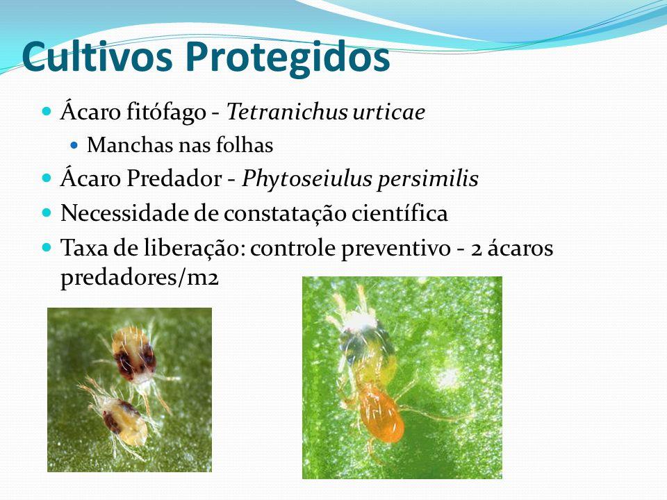 Cultivos Protegidos Ácaro fitófago - Tetranichus urticae