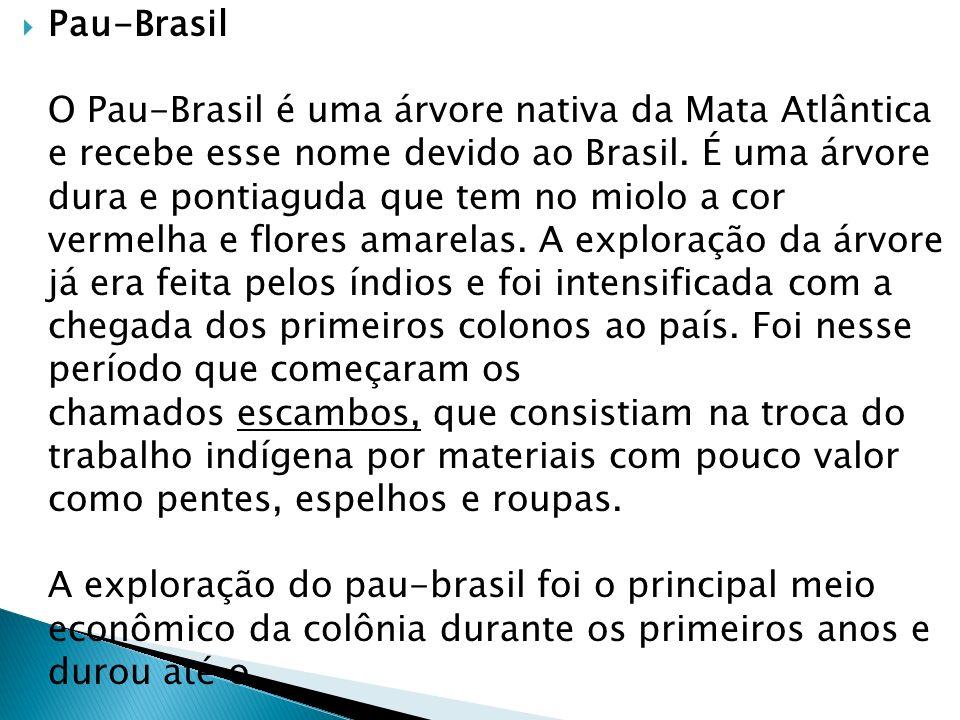 Pau-Brasil O Pau-Brasil é uma árvore nativa da Mata Atlântica e recebe esse nome devido ao Brasil.